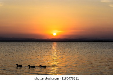 Image of three ducks in a row swimming on a lake at sunset.
