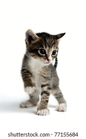 An image of a tiny little kitten on white background