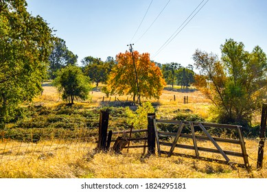 Image of a tree changing colors in a country field.