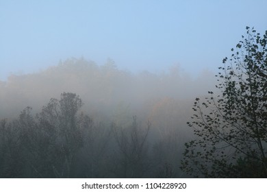 image of tree tops in a foggy forest in fall
