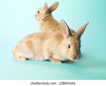 Image of two golden rabbits sitting on turquoise background.