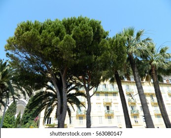 An image of two nice palm trees in the blue sunny sky, in Nice, France.