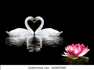 Lotus Flower Two Swans Symbol Love Stock Photo Edit Now 1140641909
