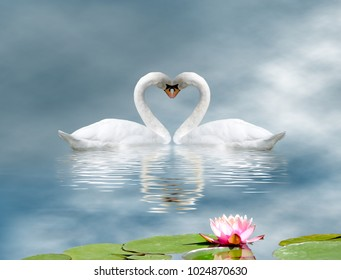 image of two swans and a lotus flower on the water