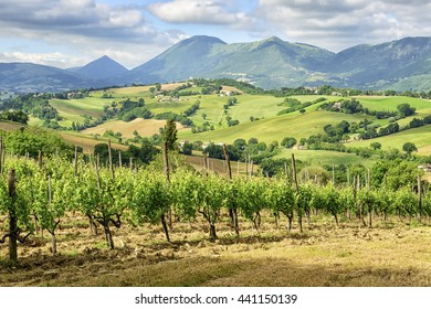 Image of a typical landscape in Marche Italy near Camerino in summer