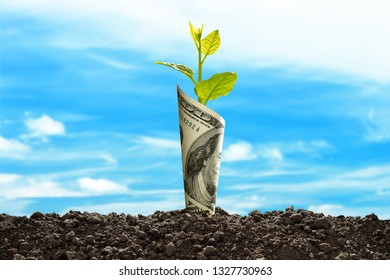 Image of US dollar bank note with plant growing on top for business, saving, growth, economic concept