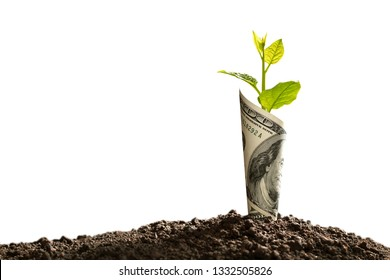 Image of US dollar bank note with plant growing on top for business, saving, growth, economic concept isolated on white background