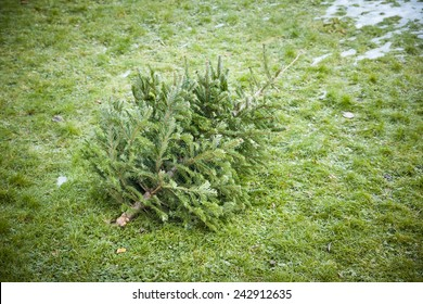 An image of an used christmas tree in the grass