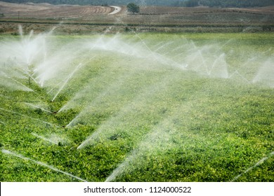 An image of vegetable fields in spring time