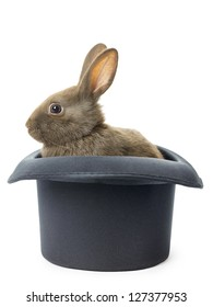 Image of a velvet brown bunny in a top hat against white background.