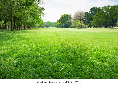 Image view of Park using as background or wallpaper.