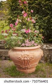 Image of vintage flower pot in garden.