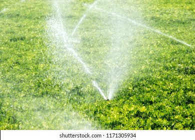 An image of watering vegetable field  in spring time