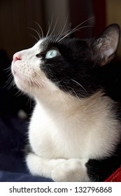 An image of a white and black cat with a clear looking