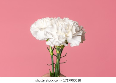 Image of white carnation flowers isolated on fuchsia pink background with copyspace