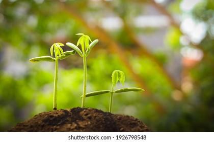 ํConcept image of young trees growth over blurry green forest.