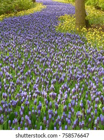 Images of flowers in Holland