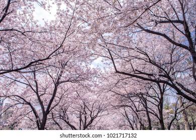 Images of Seoul Korea