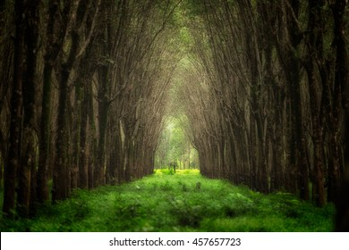 Imaginary tree tunnel. Beautiful nature forest fantasy.