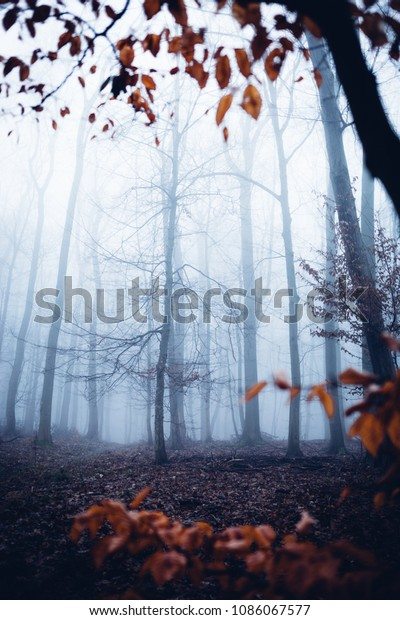 Imaginative trees in the scary forest