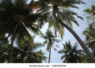 Imagine standing beneath coconut palm trees on a clear summer day. Under the blue sunny sky and green leaves, you feel bliss and ultimate romance.