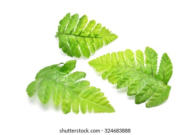 Imitate fern leaf made from fabric