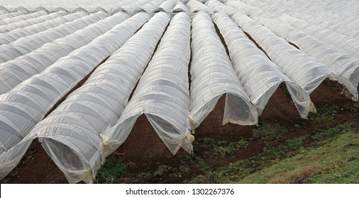 immense expanse of white greenhouses for the cultivation of vegetables even in the colder seasons