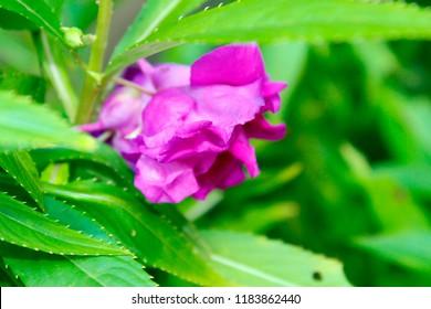 plants Used to Treat Disease