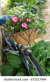Impatiens in a bicycle flower basket