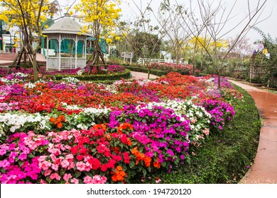 impatiens flowers in tropical garden