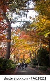Imperial Palace, Tokyo/Japan - People enjoying the fall foliage in the East Gardens of the Imperial Palace in Tokyo, Japan.