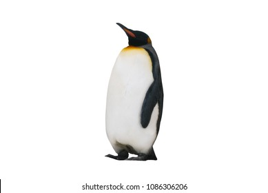 imperial penguin on a white background isolated