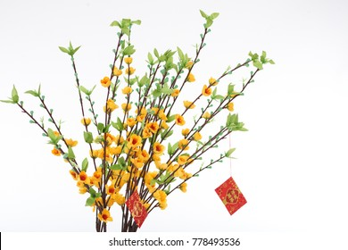 Important attribute of Lunar New Year: close-up shot of blooming ochna tree decorated with red envelopes, isolated on white background
