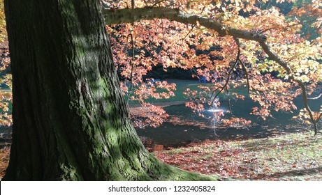 Imposing tree trunk with golden leaves pierced by the sun (harmony, relaxation - concept)