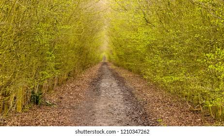 an impression of the Essex Way Trail, Hiking Trail