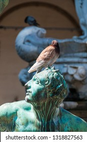 Impression of a Pidgeon sitting on a statue in central Florance, Italy.