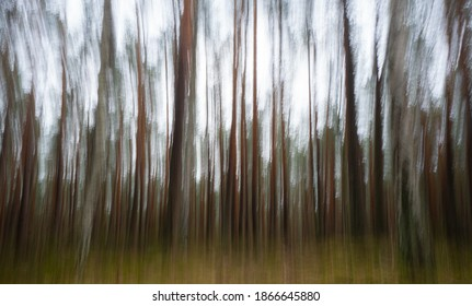 Impressionist forest using intentional camera movement technique with long exposure, abstract image captured in the ancient forest of Kampinos north of Warsaw in Poland.