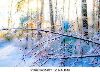 Impressionistic cherry branch in snowy sunlight