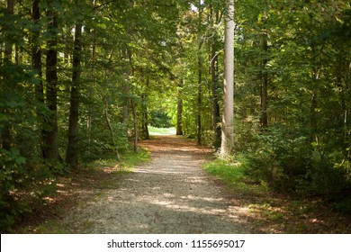 Impressions of a forest in Germany in summer. View of a road in the forest with view to the forest exit.