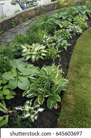An impressive Hosta border in Cottage Garden