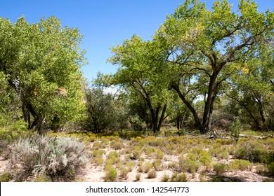 Impressive and scenic landscape in New Mexico