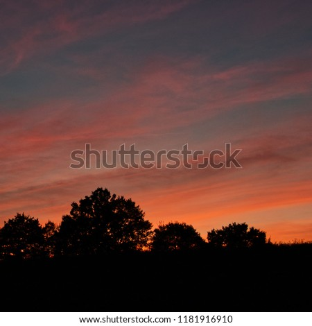 Impressive sky at sunset with silhouetted trees
