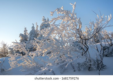 An impressive tree covered in rime ice on the slopes of Babia Góra in the Polish Mountains, other snow covered trees in the background (Drzewo pokryte szadzią na Babiej Górze, polskie zimowe góry) - Shutterstock ID 1681759276