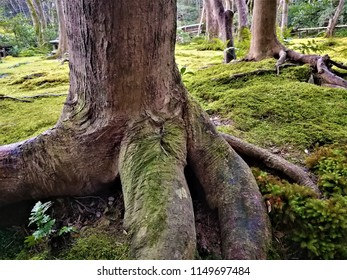 Impressive tree trunk
