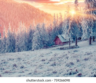 Impressive winter sunrise in Carpathian mountain village with snow covered fir trees. Colorful outdoor scene, Happy New Year celebration concept. Beauty of countryside concept background.