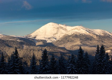impressive winter view in mountains, spruce in snow on background forest in wonderful sunny day, beauty nature scenery, beautiful  cold weather, Carpathian image, Petros, Ukraine, Europe landscape