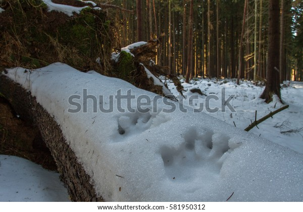 Imprint of hands in snow.