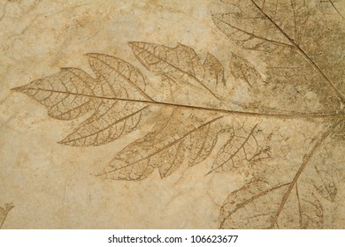 The Imprint of leaf on cement floor background