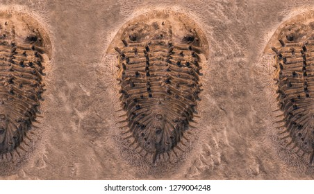 The imprint of the trilobites in a stone. 500 million Year old Trilobite. Trilobites meaning three lobes are a fossil group of extinct marine arachnomorph arthropods that form the class Trilobita.