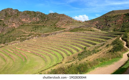 Inca Terraced agriculture fields in Peru, green grass meadow, peaceful Peruvian nature, idyllic summer landscape, ancient fortress Pisac in Sacred Valley of Incas Cuzco region.